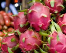 Fresh Dragon Fruit for sale