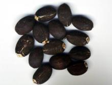 extraction of jathropa curcas seed fats Uses of non edible jatropha seeds:  the detoxified jatropha curcas seed cake and castor oil  after extraction oil from jatropha seeds it can be utilized .