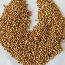Red broom corn millet products,South Africa Red broom corn millet