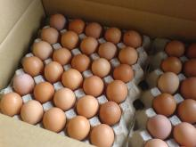 FRESH POULTRY BROWN AND WHITE TABLE EGGS