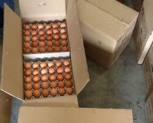 Grade A Brown Table Chicken eggs