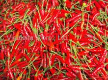 Fresh Small Red Chilli