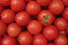 Fresh Red tomato wholesale tomatoes farm fresh tomatoes for sale