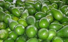 Tropical Avocados
