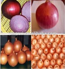OFFER FRESH ONION ORIGIN VIETNAM WITH COMPETITIVE PRICE