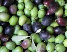 Green & Black Organic Fresh Olives