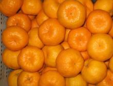Tasty fresh mandarin oranges for sales