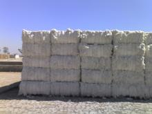 Raw Cotton For Sale