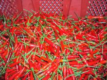 Offer for fresh red chilli