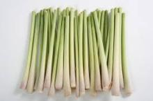 OFFER FOR LEMONGRASS BEST QUALITY FROM VIETNAM
