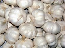 Offer for Garlic from Viet Nam with best price