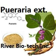 Natural Kudzu Root extract with 98% Puerarin by HPLC