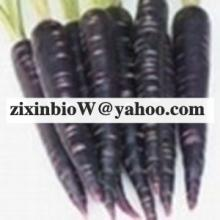 Black Carrot Color