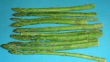 Fresh Frozen Asparagus