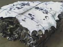 Salted Cow Hide (wet and dry)