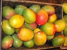 Fresh Mangoes And Mangoe Juice