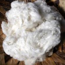 Quality Raw Cotton For Sale