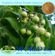 40%-80% Soapnut Saponin Soapberry Extract/Soapberry Extract Powder