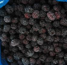 IQF Frozen Blackberry Fruit