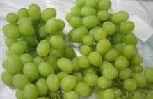Sweet Fresh Grapes