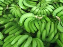 Class A Cavendish Bananas.