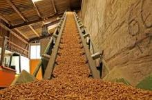 Fuel wood pellet biomass pellet fuel