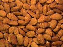 Organic Bitter Apricot Kernels