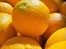 Fresh Oranges for sell from South Africa