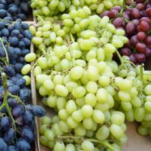 Fresh Grapes from South Africa for sell