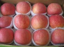 FUJI APPLES FOR SELL FROM SOUTH AFRICA