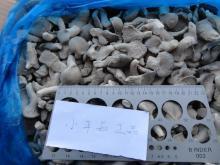 frozen oyster mushroom