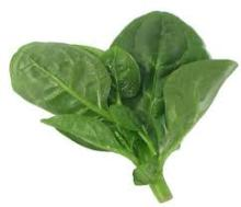 Fresh spinach powder for life