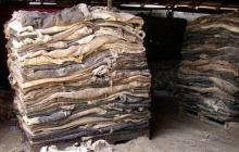 Raw Wet Salted Cattle Hides | Cow Skins /buffalo Horns For Sale