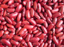 Red And White Kidney Bean