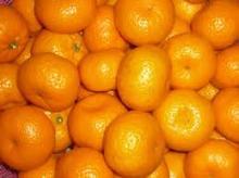 Baby Mandarin