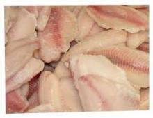 frozen tilapia fish fillet