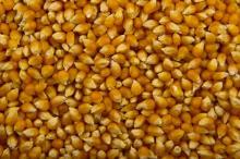 Yellow   corn   feed  FOB port Odessa Ukraine