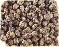 Organic Castor-Oil Seeds