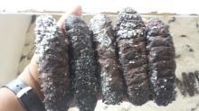 Dried Holuthoria Mexicana sea cucumber