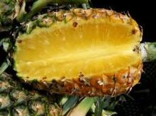 Fresh pineapple ( Tropical fruit)