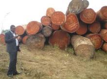 Padouk round logs