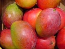 Fresh Keitt and Haden Mangoes