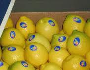Fresh Limes/Lemons