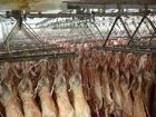 Frozen Mutton/Lamb Meat