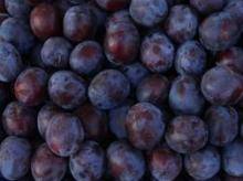 Fresh Plums for sell