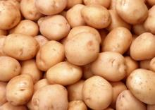 Fresh Potatoes for sell