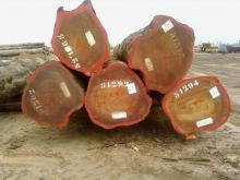Quality Padouk Logs Timber