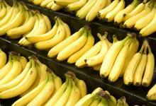 Cavendish Fresh Banana