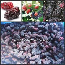 Frozen Fresh Mulberry