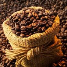 Best price high quality Viet Nam Robusta Coffee Beans